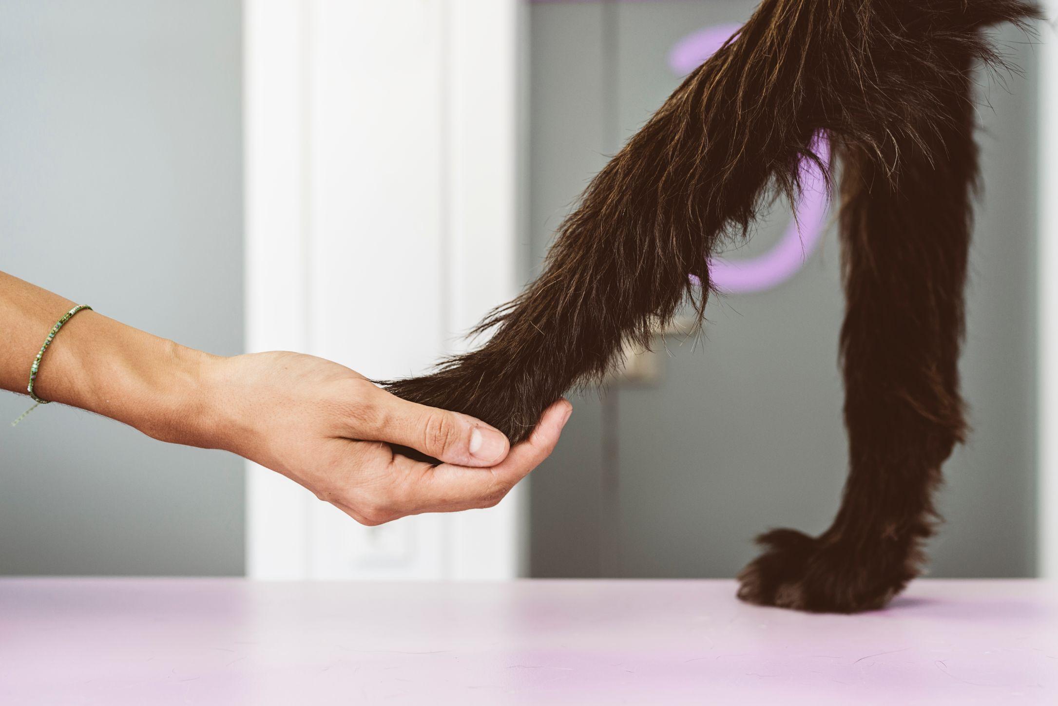 Pet and Dog Knee Surgery