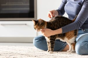 DIY Home Care For Cats