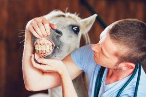 Preventative Health Care for Your Horse