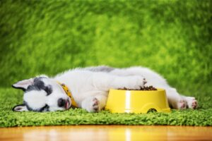 9 Diet & Nutrition Tips to Keep Your Pet Healthy