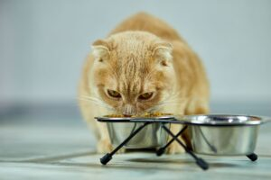 Can Pets Have Food Allergies