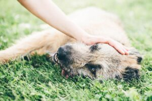 Can Dogs Have Seasonal Allergies? Signs and Treatment