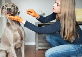 DIY Home Pet Care For Dogs